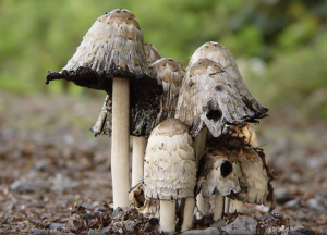 jmv Magic Mushrooms? NOT CC BY 2.0